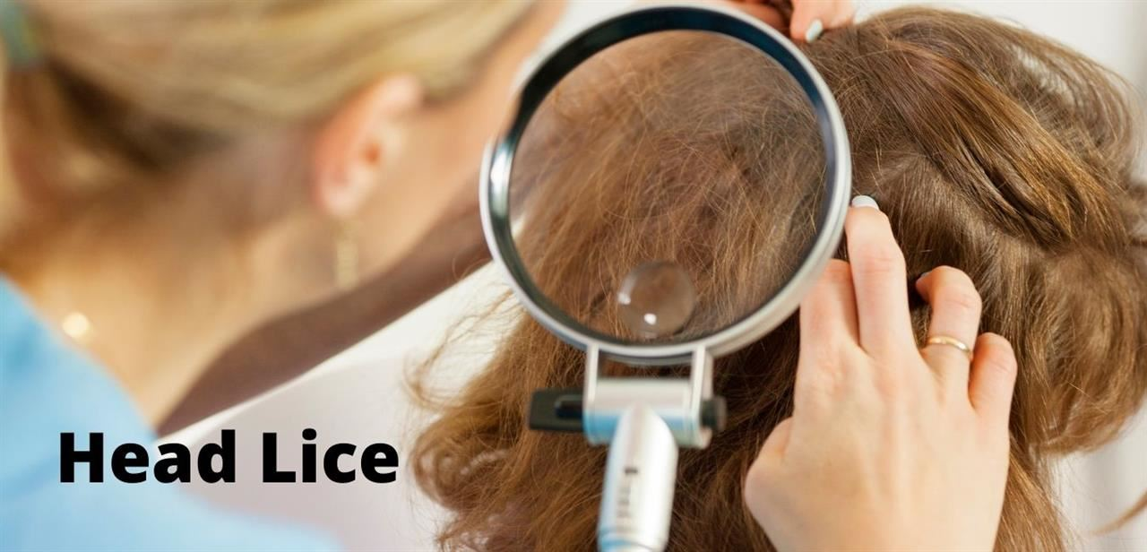 School Health / Head Lice